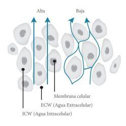 impendacia1_nutripharma